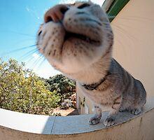 Fish-eye Kitty by Noam Gordon