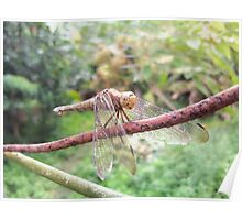 The Shy DragonFly Poster