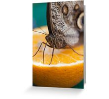 butterffly on fruitbutterffly on fruit Greeting Card