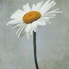 Marguerite by Iris Lehnhardt
