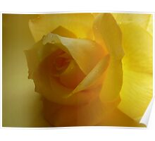 """""""Complexion""""  Yellow Patio Rose Poster"""