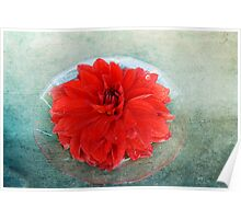 Red Dahlia Offering Poster