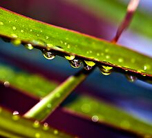 Green Drops by Scott  Cook