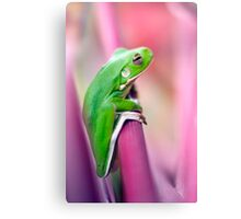 Froggie in the pink Canvas Print