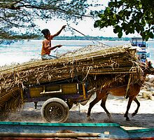 Cidomo horse carts of the Gili Islands.  by Normf