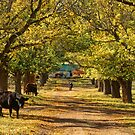 The Long Driveway - Almost Autumn by clearviewstock