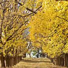 The Long Driveway in Autumn / Fall by clearviewstock