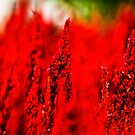 Go to extremely RED.: On Featured Work by Kornrawiee