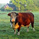 Good morning Cow by ienemien