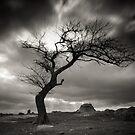Dog Rock Tree by Christine  Wilson Photography