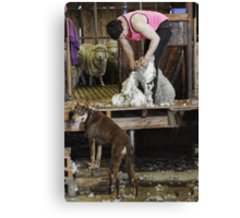 LEARNING THE ROPES Canvas Print