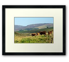 Nervous Cows Framed Print