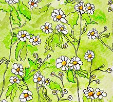 Chamomile Fancies by Sue H