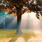 Autumn light by EliseEnchanted