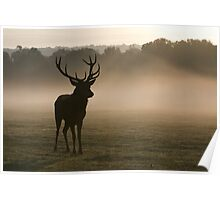 Red Deer in Richmond Park Poster