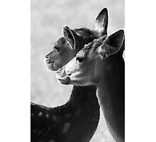 Rams Woerthe Deer Photographic Print