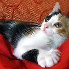My cute kitten by ambra2italy