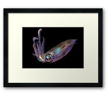 The Squid Framed Print