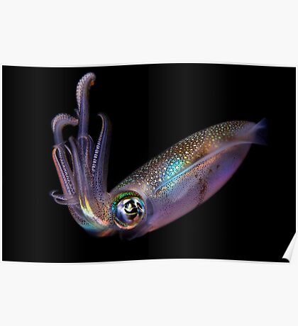 The Squid Poster