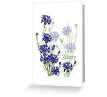 blue meadow cornflower design Greeting Card