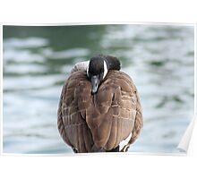 Sleeping Goose Poster
