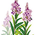 pink meadow flower fireweed design by Veera Pfaffli