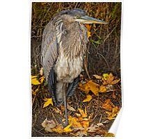 Fall Heron Poster