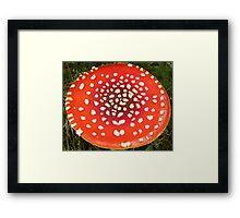 Amanita Freckles Framed Print