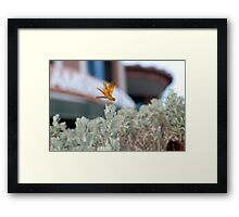 You Lookin' At Me? Framed Print