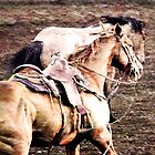 Horses on Rust - Molalla Buckeroo  by Diana Cox