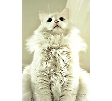 Spoiled Bratty Kitty Photographic Print