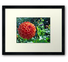 Flowering Ball Framed Print