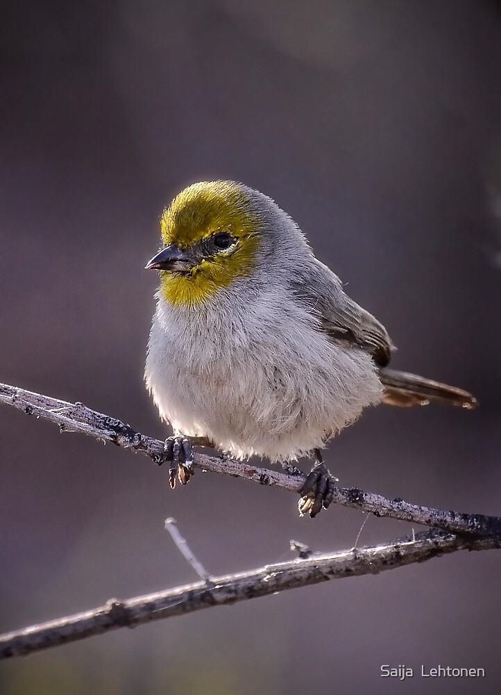 Cutie Patootie! by Saija  Lehtonen