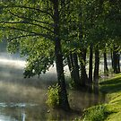 Trees in water at misty morning by Antanas
