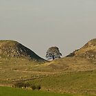 That special place on Hadrian's wall. by sandyprints