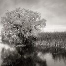 Marsh Mellow by Steve Silverman