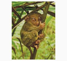 Cool Tarsier