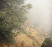 Mountain Fog by Ellen Cotton