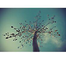 Tilt Shift Tree Photographic Print