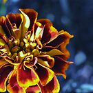 Another Marigold by MaryLynn