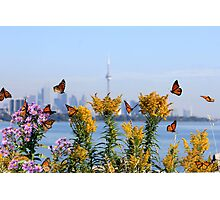 Migration Dance Of The Monarch! Photographic Print