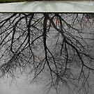 Rainy reflection by Catherine Davis