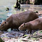 Capybara and Her Baby by Cynthia48