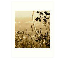 Topiary Gorge  Art Print