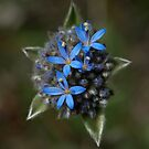 Blue Pincushion by Ben Loveday
