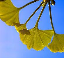 Sunshine. Ginkgo. by Janice Chiu