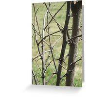 Thorns Greeting Card