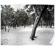 blanketed snowy field Poster