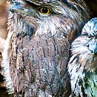Tawny Frogmouth by Renee Hubbard Fine Art Photography