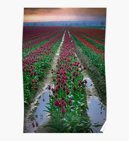 Tulips & Soil Poster